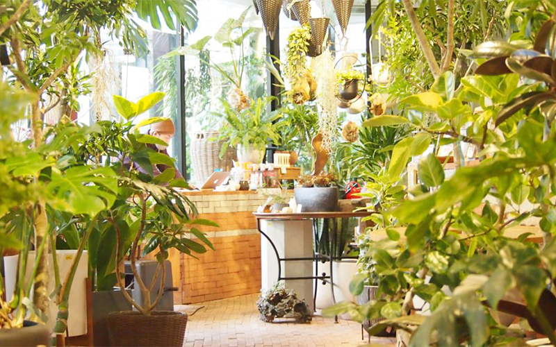 Green-cafe-GROUNDS